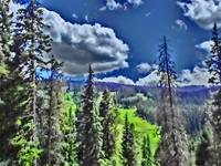 Vibrant mountain forest scenic Colorado print