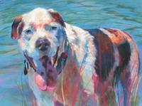 caroljean the bully breed in the water