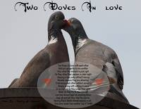 Two Doves In Love
