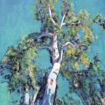 Eucalyptus Tree Balboa Park San Diego by RD Riccoboni