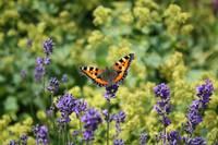 Butterfly World by Carol Groenen