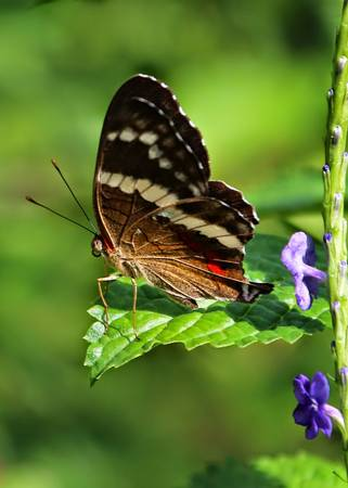Butterfly on the Edge
