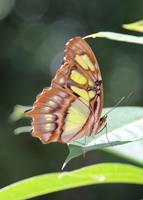 Butterfly Bokeh by Carol Groenen