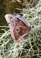 Butterfly in Moss by Carol Groenen