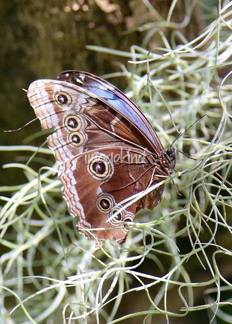 Butterfly in Moss
