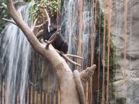 Monkey and Waterfall