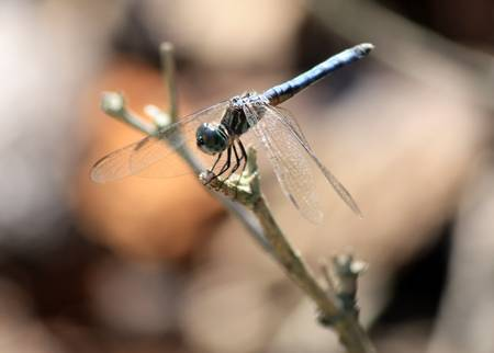 Dragonfly Nap Time