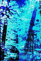 Fine Art Original Digital Forest Scene Maryland