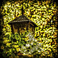 Lantern In Leaves