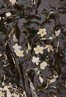 fallen leaves and flowers abstract