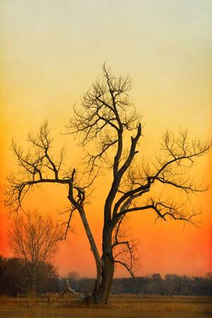 Winter Season Sunset Tree