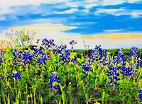 Tonya's Sunset With The Texas Bluebonnets