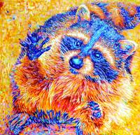 Orange Raccoon