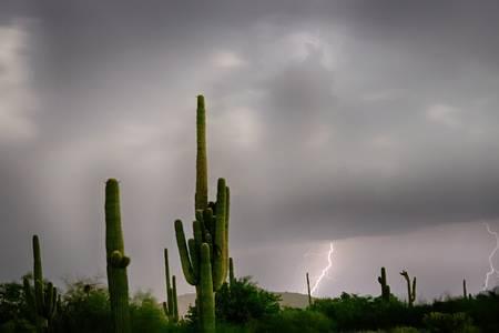 Sonoran Monsoon Lightning Thunderstorm Delight