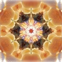"""Sea shell Mandala Star"" by SeaAngel12"