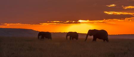 Morning on the Masai Mara
