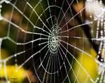 Spider Web with Dew by Allen Sheffield