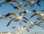 Seagulls and Bread by Allen Sheffield