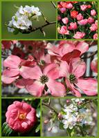 Welcome Spring Collage by Carol Groenen