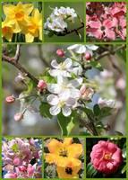 Spring Fling Collage by Carol Groenen