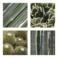 Cacti Textures Collage by Carol Groenen