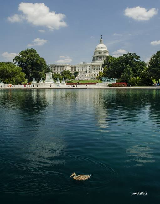 U S Capitol with Duck
