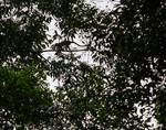 Monkey Overhead 1 by Allen Sheffield