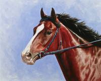 Bay Thoroughbred Horse