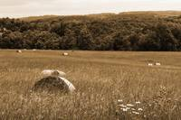 Wildflowers and Haybales sepia