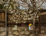 Bradford Pear Tree by Allen Sheffield