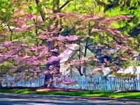 White Picket Fence by Flowering Trees