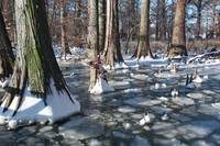 Winter on Reelfoot Lake