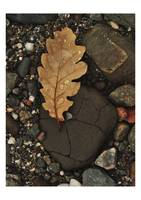 Leaf and Rock