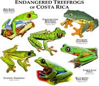 Endangered Treefrogs of Costa Rica