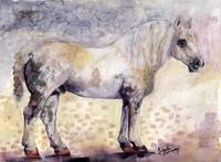 Percheron French Horse Watercolor