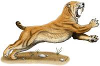 Saber-Tooth Cat