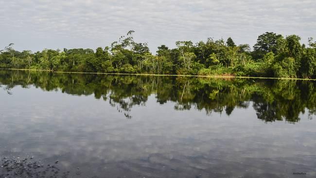 Amazon Riverscape