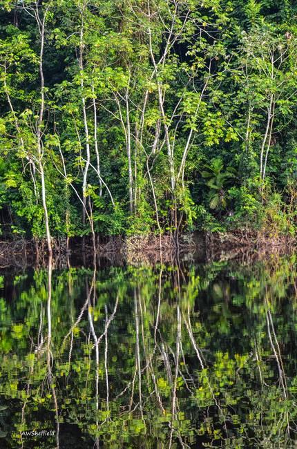 Amazon Reflections 4