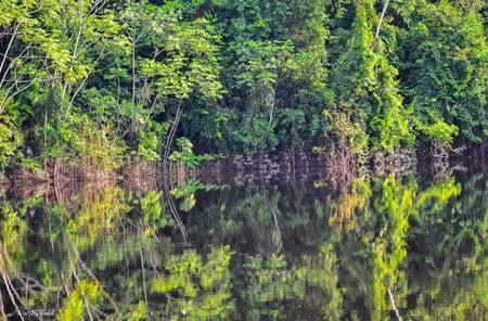 Amazon Reflections 5