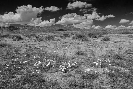 Franklin Mountains in B&W