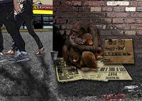 Homeless Chimps  Justin Beck Picture 2015083