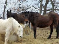 My picture shot of beautiful horses 3-19-2015