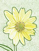 Yellow Flower Photo Illustration