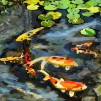 Koi Pond by Lisa Rich