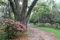 Azalea Garden Path by Carol Groenen