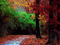 Follow Your Path Stay True, Colorful Autumn Day