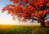 Autumn Tree Sunrise Meadow