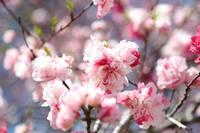 Springtime Magic by Carol Groenen