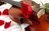 Music, Red Rose Violin Romance Love