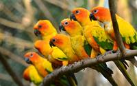 Beautiful Orange and Yellow Parrots
